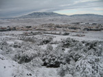 Pinoso nevado